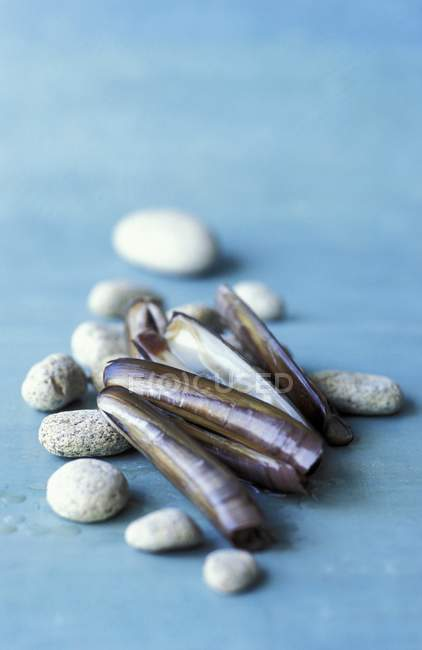 Closeup view of razor clams and stones on blue surface — Stock Photo