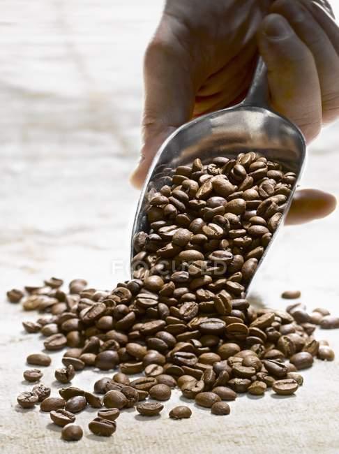 Coffee beans on server — Stock Photo