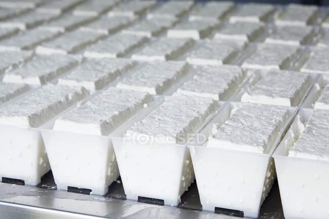 Queso fresco en recipientes en una lechería (cerrar) - foto de stock