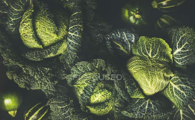 Сырая савойская капуста — стоковое фото