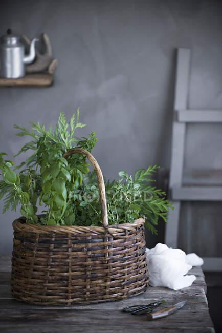 Много зеленых растений на деревянной доске на белом столе — стоковое фото