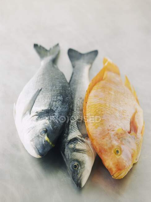 Gilt head seabream, sea bass and tilapia — Stock Photo