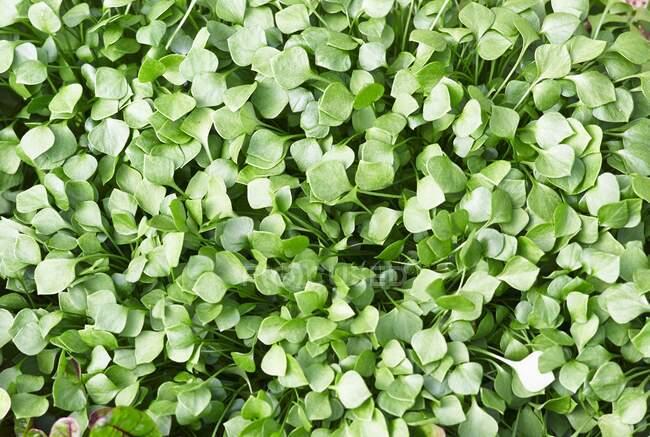 Зеленые листья фона, закрыть — стоковое фото