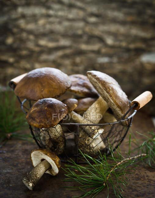 Primer plano de deliciosas setas del bosque en una canasta - foto de stock