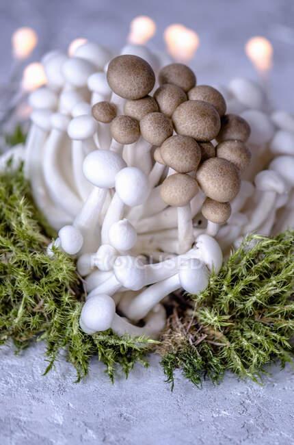 Champiñones enoki marrones y blancos y musgo verde y guirnalda en una superficie de hormigón - foto de stock