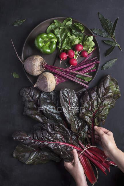 Hands taking fresh vegetable — Stock Photo