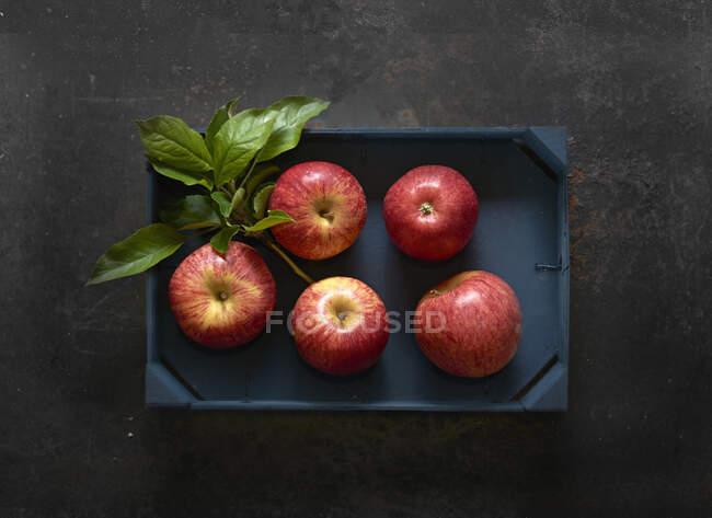 Manzanas Elstar rojas frescas en una caja de madera - foto de stock