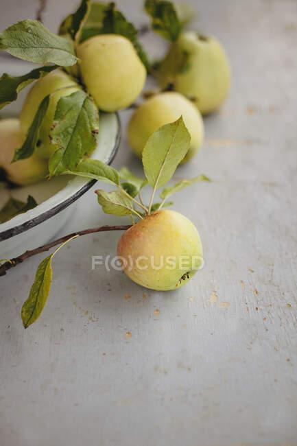 Manzanas amarillas con ramas y hojas en tazón y sobre la mesa - foto de stock