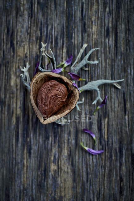 Una avellana con cáscara en una superficie de madera - foto de stock