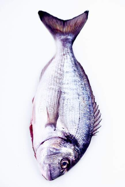 A whole sea bream with tail and side fins on a white background — Stock Photo