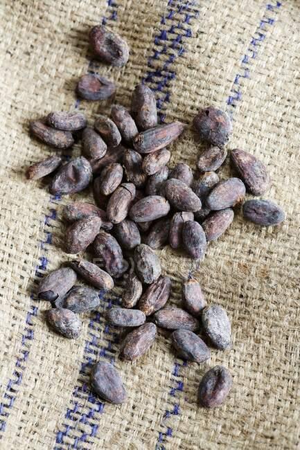 Cacao frijoles vista de cerca - foto de stock