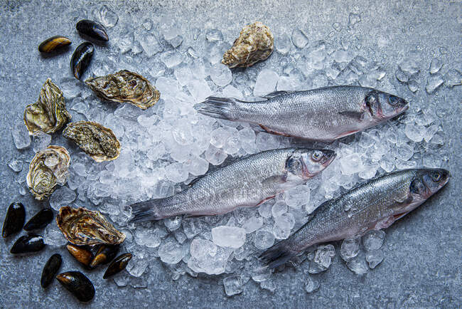 Fish, oysters and mussels on ice view from above — Stock Photo