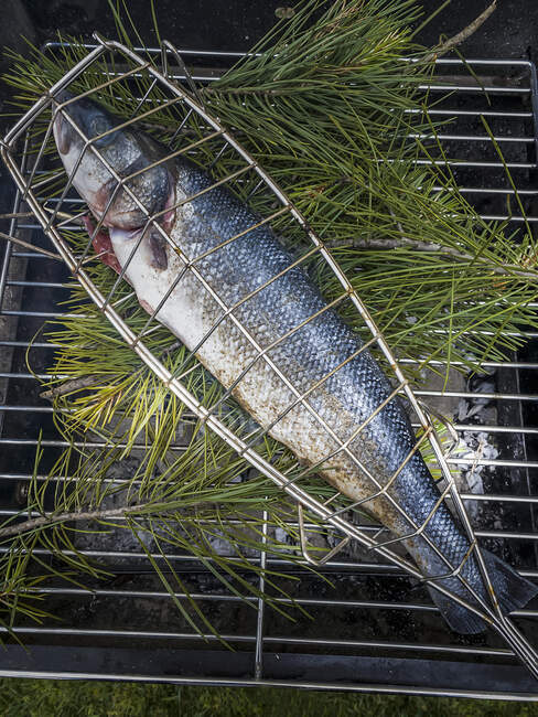 Barbecued sea bass on pine needles — Stock Photo