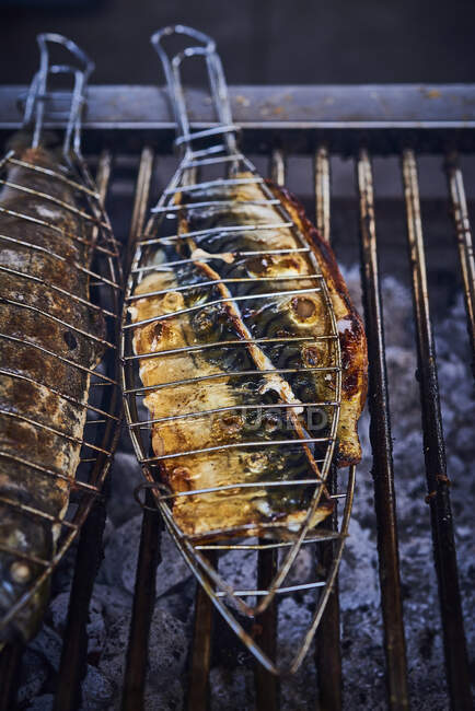 Mackerels in a fish grill plate over a grill — Stock Photo