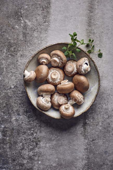Champiñones frescos en un plato de cerámica - foto de stock