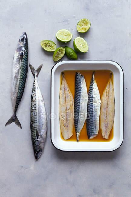 Marinated mackerels close-up view — Stock Photo