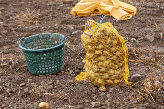 Potato harvest: a basket and potato sack in a field - foto de stock