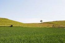Campo gramado contra o céu — Fotografia de Stock