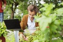 Людина збору трави з рослин — стокове фото