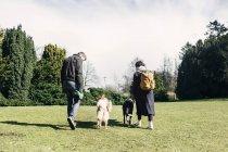 Пара ходьба собаки — стокове фото