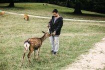 Man feeding deer at national park — Stock Photo