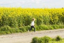 Strada sterrata al campo di colza — Foto stock