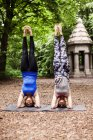 Mujeres jóvenes practicando yoga - foto de stock