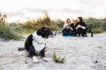 Собаки отдыхают на пляже — стоковое фото