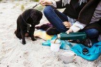 Собака, глядя на женщину разлива кофе — стоковое фото