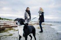 Женщина на поводке у собаки — стоковое фото
