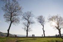 Menschen an Bäumen im Park — Stockfoto