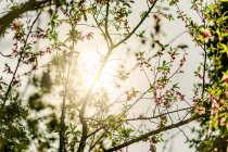 Sun shining through branches — Stock Photo