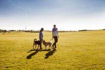 Koppel mit Hunden im park — Stockfoto