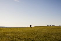 Distant view of couple with dog — Stock Photo
