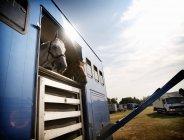 Коні в причепі на полі — стокове фото