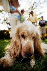 Собака, опираясь на поле — стоковое фото