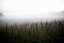 Plantes qui poussent sur le champ — Photo de stock