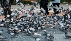 Люди годування голубів — стокове фото