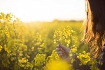 Frau mit Rapsblüte — Stockfoto