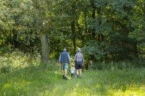 Avós caminhando com neto (2-3) na floresta — Fotografia de Stock