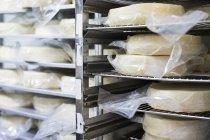 Käse auf Rack drinnen — Stockfoto