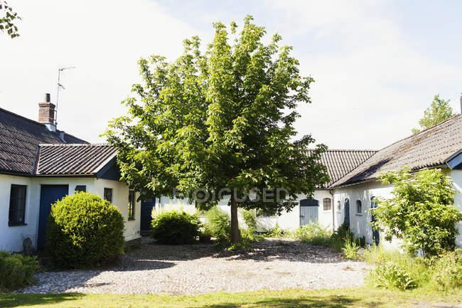 Дерево росте посеред будинків — стокове фото