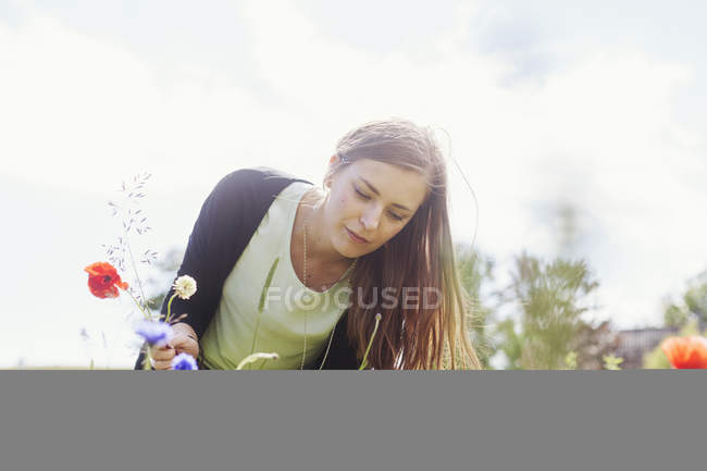Woman picking poppy flowers — Stock Photo