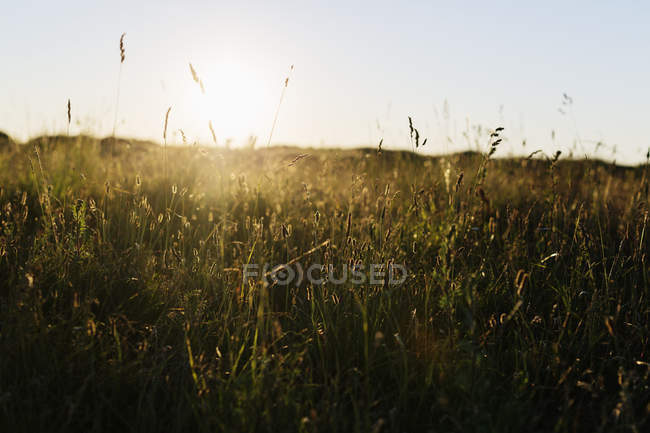 Grass growing on field — Stock Photo