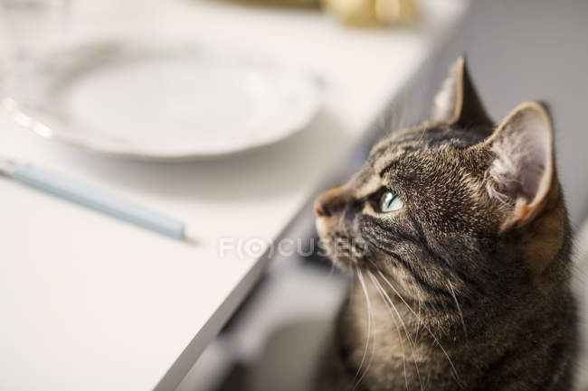 Tabby cat sitting near table — Stock Photo