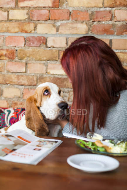 Woman with Basset Hound — Stock Photo