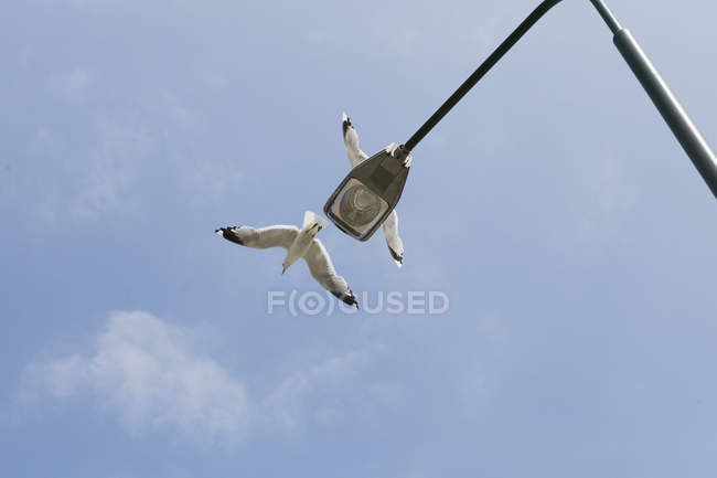Street light and seagulls against sky — Stock Photo