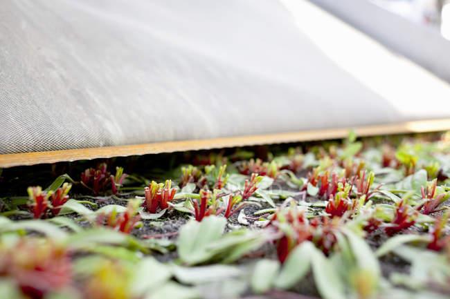 Harvested leafy vegetables — Stock Photo