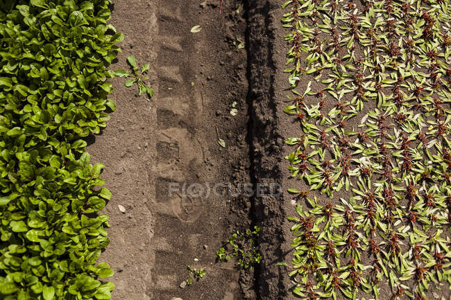 Tire track amidst field — Stock Photo