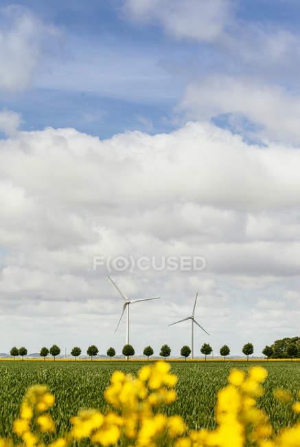 Windkraftanlagen auf Feld — Stockfoto